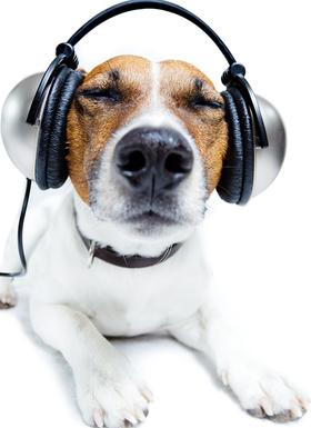 Doglisteningtomusic 293980 article