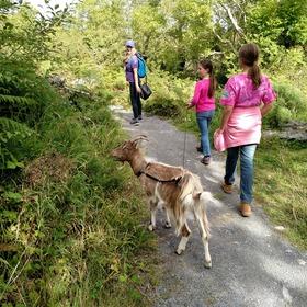 Herb walk at burren nature sanctuary article