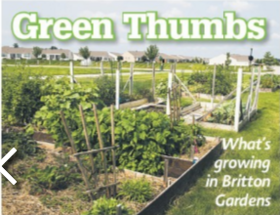 Greenthumbs article