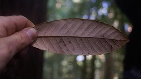 Kebet ridge leaf.jpg  1072x0 q85 upscale article