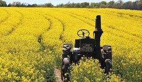 Field of rapeseeds 1382772 640 640x372 article