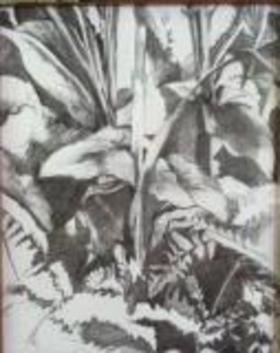 Marea ferns article