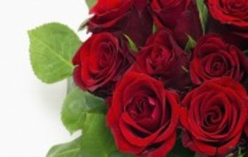 Red red roses 87413 article