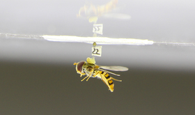 Hoverfly topnteaser2 article
