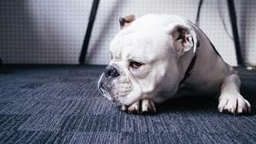 Feature image   bulldog article