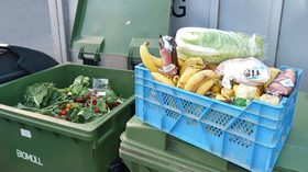 Freegan food recovery 918x516 article