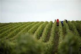 Champers harvest 2 b6ce93287d3c692988dfda8002175433.nbcnews ux 320 320 article