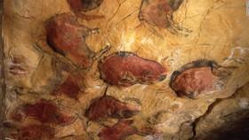 140228101703 altamira cave 1 horizontal large gallery article