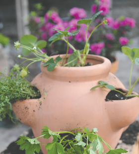 Container gardening article