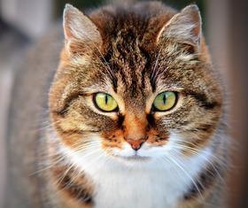 Pet insurance article