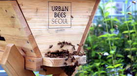 Urban bees seoul beehive article