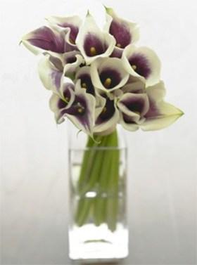 Vermeer calla lilies 10stem.jpg article