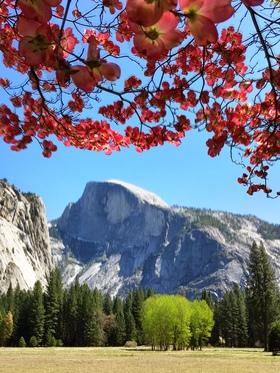 Yosemite article