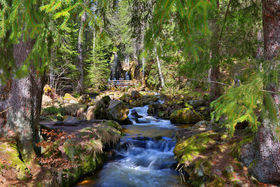 Black forest waterfall article