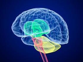 Brain article