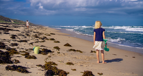 860 main beach science article