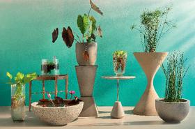 Plantas article