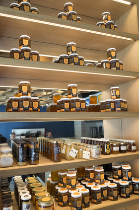 Honeybrains 2 article