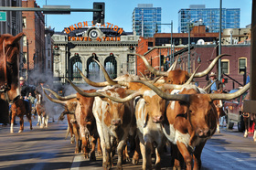 National western stock show parade article