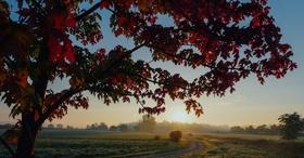 Autumn article