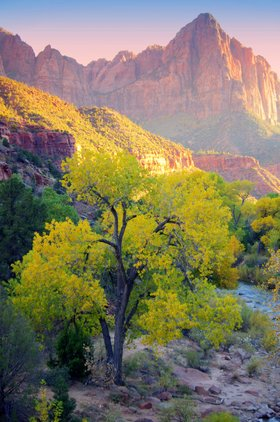 Cottonwoods turning yellow at the watchman%c2%a9karin leperi article