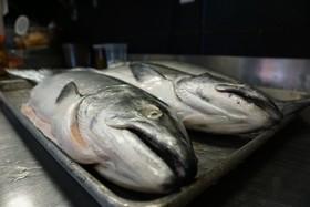 Salmon 1 article