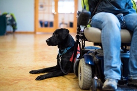 Service dogs article