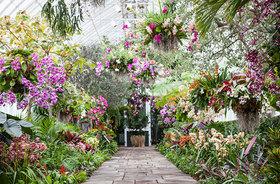 Summery nyc new york botanica garden article