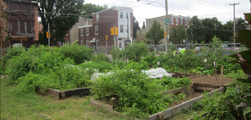 Http vacant to verdant planphilly article