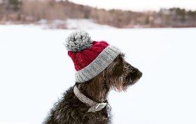 Winterdogs override article