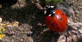 Lucky ladybird e1487322687561 article