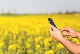 Man field smartphone yellow article