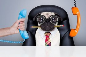 Pets at work 768x512 article
