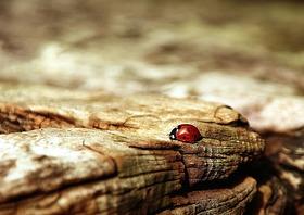 Ladybug 354521 1920 article