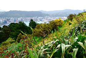 Wellington new zealand article