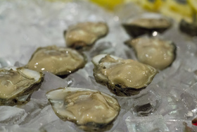 Virginia chesapeake oysters virginia sea grant flickr article