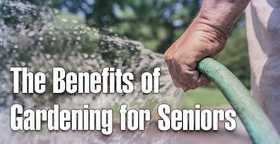 Senior gardening article