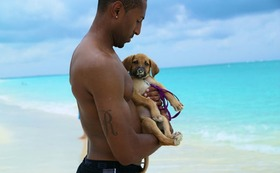Rescue dog island potcake place turks and caicos 17 article
