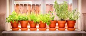 Potted herbs header article