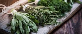 Herbs windowsill header article