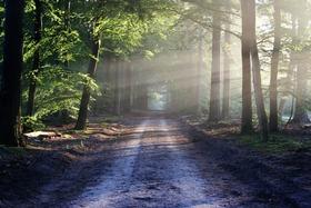 Road sun rays path article