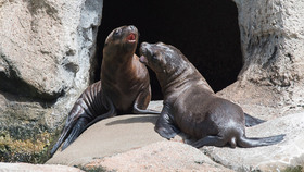 Sealions article