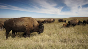 Best national parks in usa for wildlife watching article