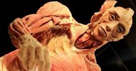 How bodies are turned into body worlds exhibits article