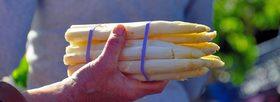 Asparagus 1121120 1920 1170x425 article