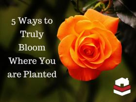 Bloom article