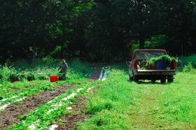 Farm article