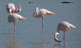 Pink flamingo topnteaser article