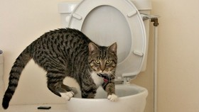 Toilet training cats article