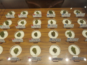 Portland cannabis kelsychauvin 01 article
